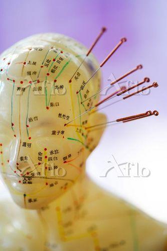 Acupuncture model.